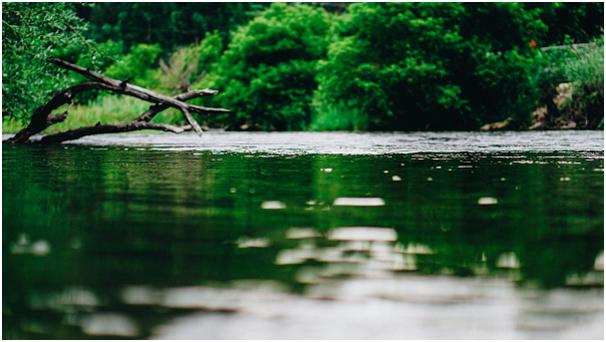 जल जीवन, पारिस्थितिक तंत्र सेवाओं का प्रदाता है और बेहतर स्वास्थ्य परिणामों के कार्यान्वयनकर्ता के र